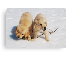 Puppies in Winter Canvas Print