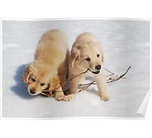 Puppies in Winter Poster