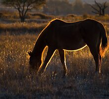 The Golden Hour by Martie Venter