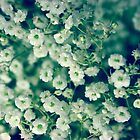 white flowers by SIR13