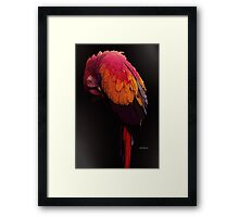 Tropical Gal Framed Print