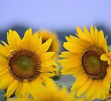 Sunny D by LynyrdSky