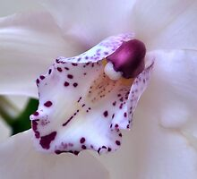 Orchid Heart. by Terence Davis