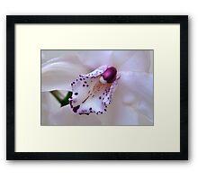Orchid Heart. Framed Print