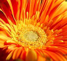 Shades of Yellow by Rosemary Sobiera