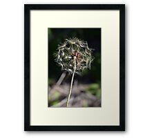 Dandelion it up Framed Print