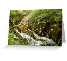 Beezley Through the Buttercups Greeting Card