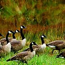 Lots of Geese by Mechelep