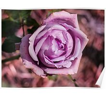 The Lilac Rose Poster