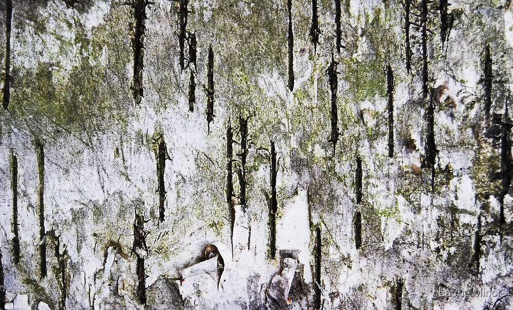 """""""Rebirth of a Forest"""" Abstract Found On Bark by Laurie Minor"""