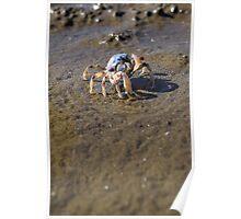 Beachy crab Poster