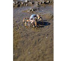 Beachy crab Photographic Print
