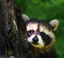 HELLO! by Laurie Minor