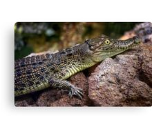 Young  Australian Salt water crocodile. Canvas Print
