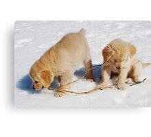 Golden Retriever Puppies First Winter #2 Canvas Print