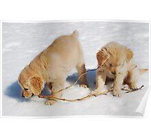 Golden Retriever Puppies First Winter #2 Poster