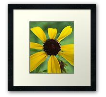 Yellow Flower with Spaced Out Petals Framed Print