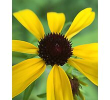 Yellow Flower with Spaced Out Petals Photographic Print