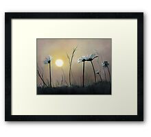 Daisies at Dusk Framed Print