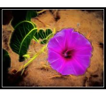 Electric Flower Photographic Print