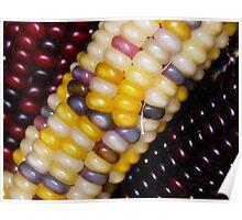Indian Corn  Poster