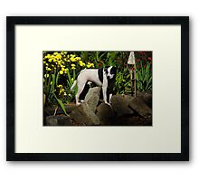 The Late, Great Drop Off, the dog Framed Print
