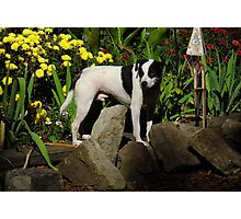 The Late, Great Drop Off, the dog Photographic Print
