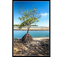 One Tree Creek Photographic Print