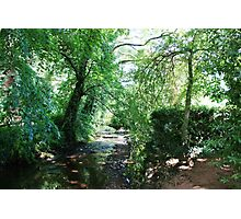 Stream in the woods, Dunster Castle Gardens Photographic Print