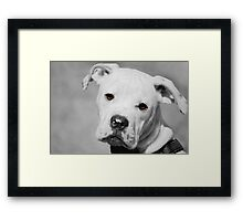 Can We Go For A Walk Now?  Framed Print