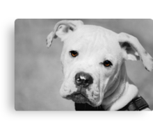 Can We Go For A Walk Now?  Canvas Print