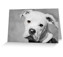 Can We Go For A Walk Now?  Greeting Card
