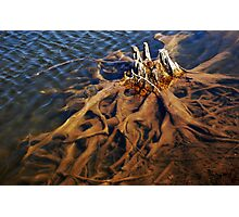 Submerged Roots Photographic Print