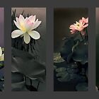 Lotus Collection by Jessica Jenney