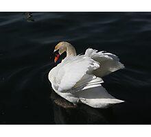Beautiful Swan Photographic Print
