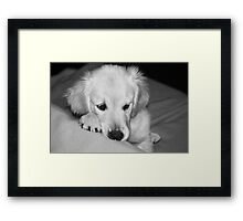 """I think it was something I ate...."" Framed Print"