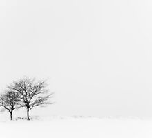 Winter Tree's by Heidi Stewart