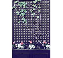 Summer Vine and Flowers on Black Wooden Grid Photographic Print