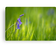 Bluebell Joy Canvas Print