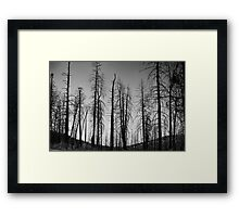 After The 2000 Cerro Grande Fire Los Alamos Framed Print