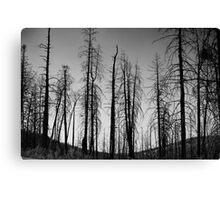 After The 2000 Cerro Grande Fire Los Alamos Canvas Print