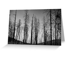 After The 2000 Cerro Grande Fire Los Alamos Greeting Card