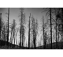 After The 2000 Cerro Grande Fire Los Alamos Photographic Print