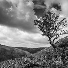 Lone Tree, Mid Wales by Heidi Stewart