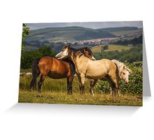 Horse's at Play Greeting Card