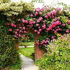 Rose Arch by hootonles