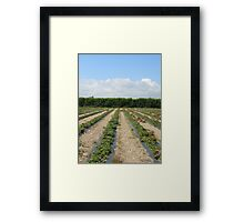 Strawberry Lines Framed Print