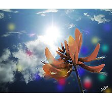 Beautiful Sun light and Tiger's Claw Photographic Print