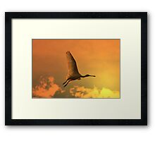 Spoonbill Stork - Sunset Flight of Color - African Wild Birds Framed Print