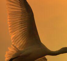 Spoonbill Stork - Sunset Flight of Color - African Wild Birds Sticker